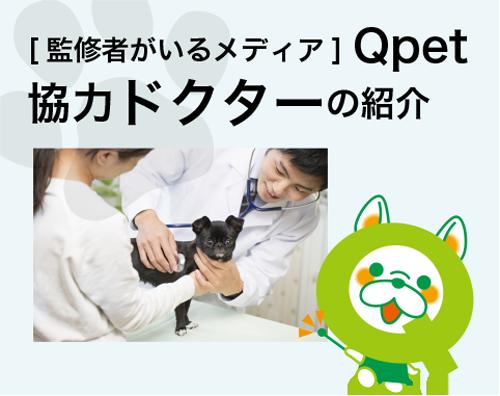Qpet協力ドクターの紹介