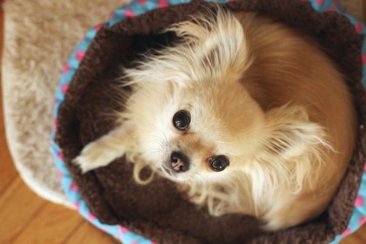 【獣医師監修】その震え大丈夫?犬が震える理由とその対処法