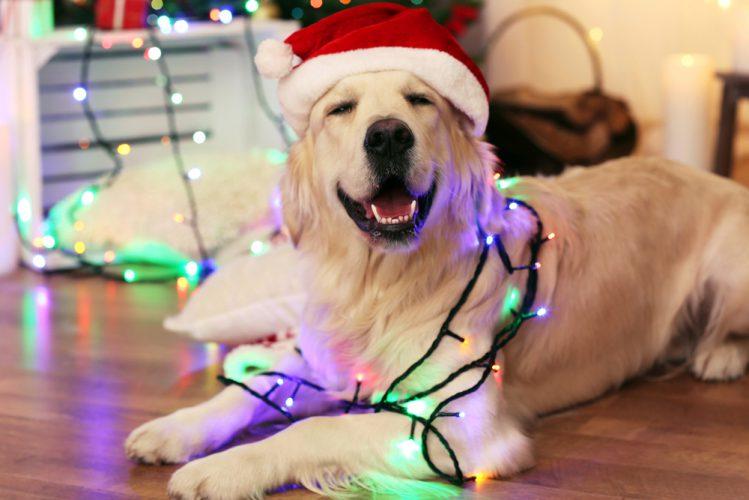 愛犬とクリスマスを祝おう!