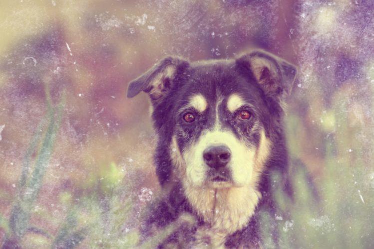 森の中で座っている犬