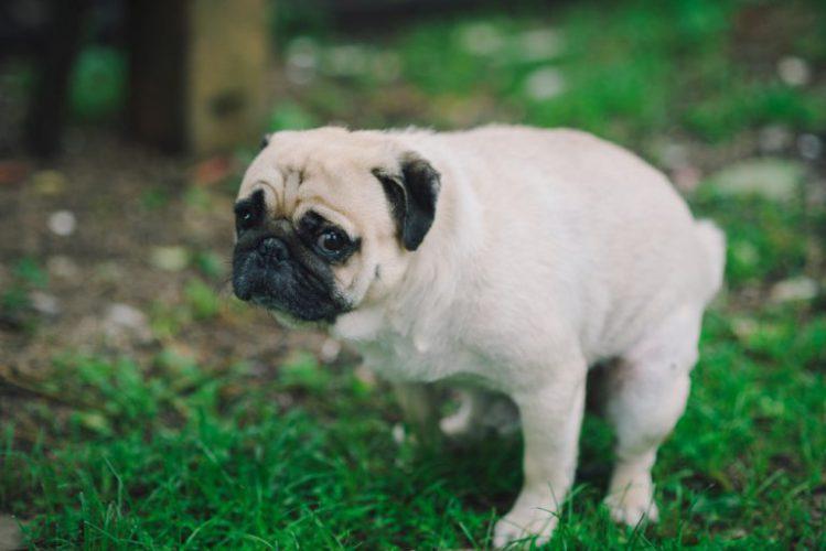 【獣医師監修】犬が下痢を起こした時の原因と対処法
