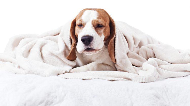 【獣医師監修】犬の心臓病とは? 症状、原因、治療法について