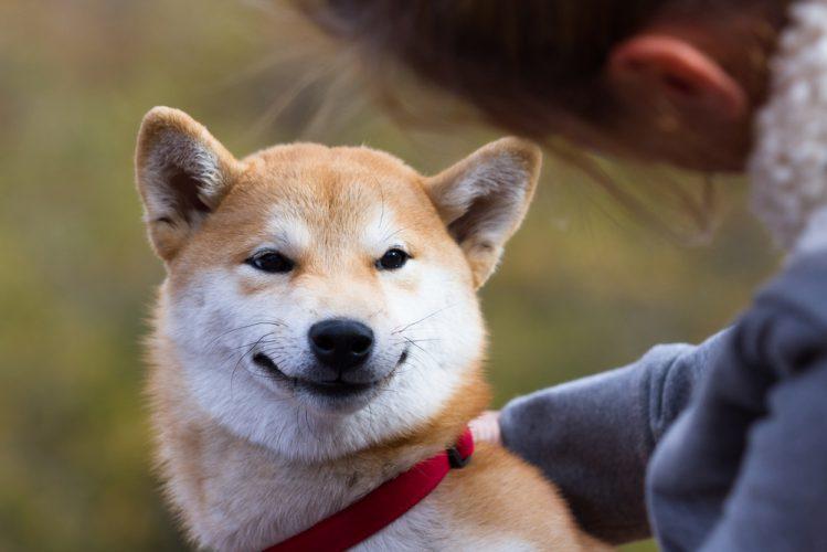 柴犬の平均寿命ってどのくらい? 快適な暮らしと長生きのためのヒント