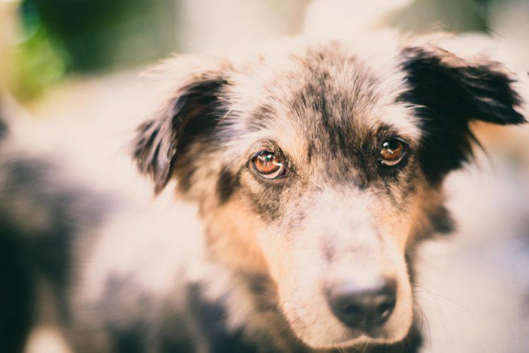 【獣医師監修】犬に噛まれた!飼い犬が他人を噛んだ!慌てないためのトラブル対処法