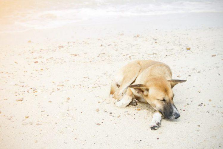陽の当たる砂浜で寝ている犬