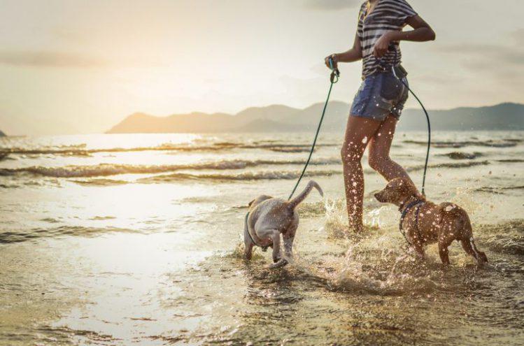 飼い主に連れられて海を走る二匹の小型犬