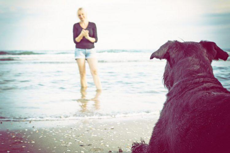 海に入っている女性を眺めている黒い毛並みの犬