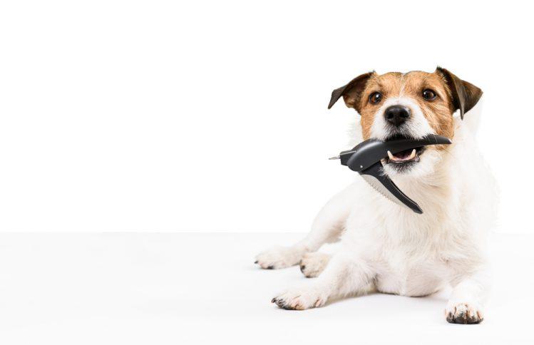 爪切りをくわえる犬