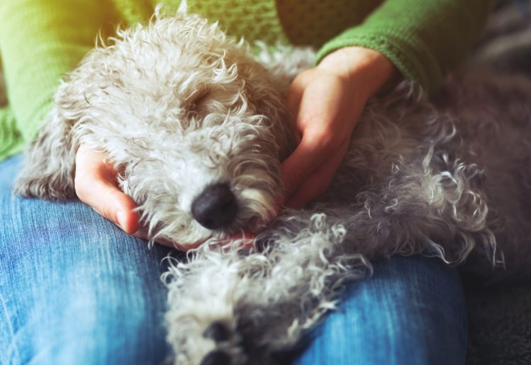 愛犬を膝に抱いている女性