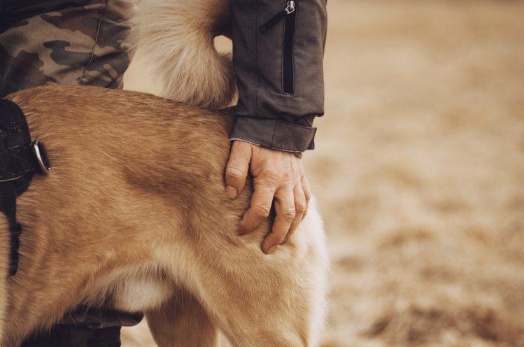犬の皮膚がんの症状って?