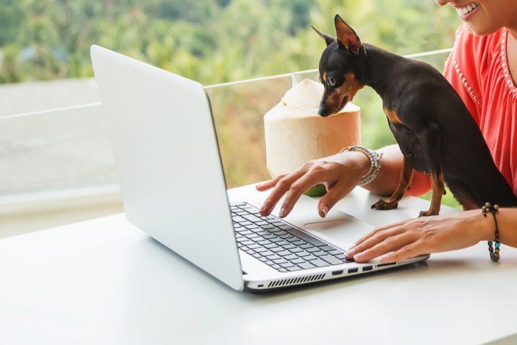 パソコンで作業する女性と画面を覗くミニチュア・ピンシャー