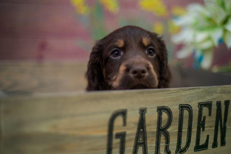 【獣医師監修】犬の膵炎とは?症状、原因、治療法について