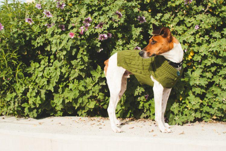 【獣医師監修】犬の膿皮症とは?症状・治療・原因について