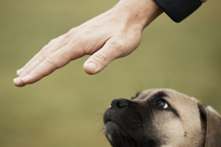 トレーニング中の子犬