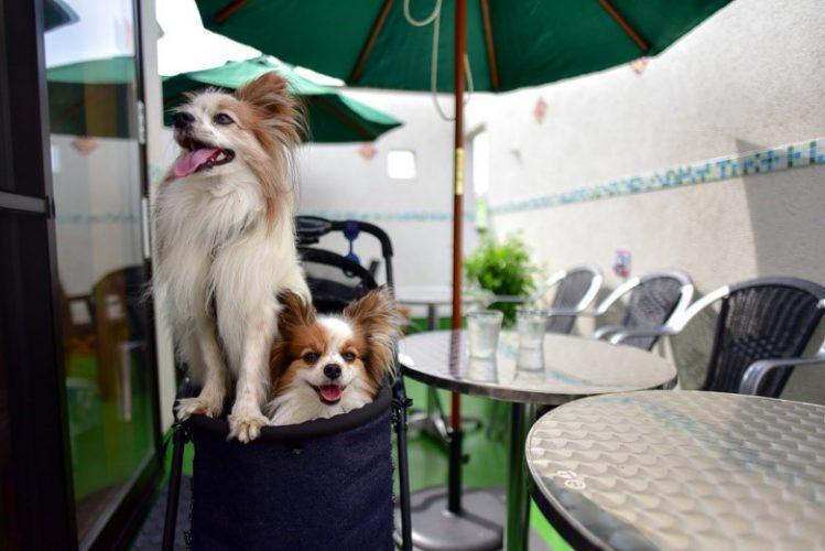 【愛犬とおでかけレポート】[神奈川県城ケ島] テラス席OK!愛犬と城ケ島で海鮮料理なら「濱田屋」