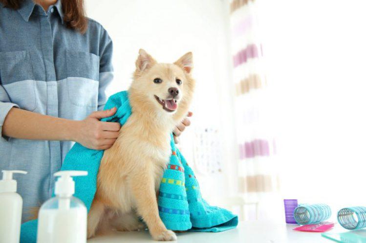 体をタオルで拭いてもらう犬