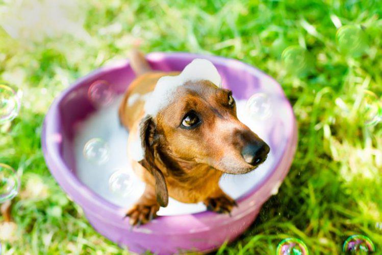 【専門家が解説】犬のシャンプー基礎知識!適切な頻度や注意点は?