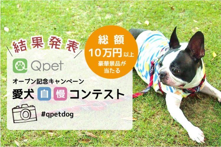 【Qpetオープン記念】第1回フォトコンテスト結果発表!
