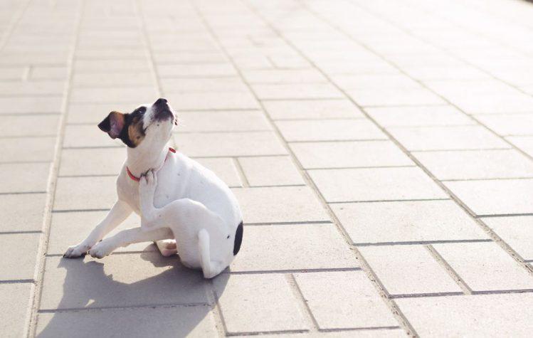 犬が道路で首を掻いている様子