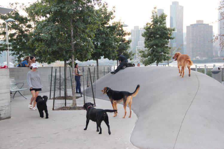 ドッグランで遊ぶ4匹の犬と女性