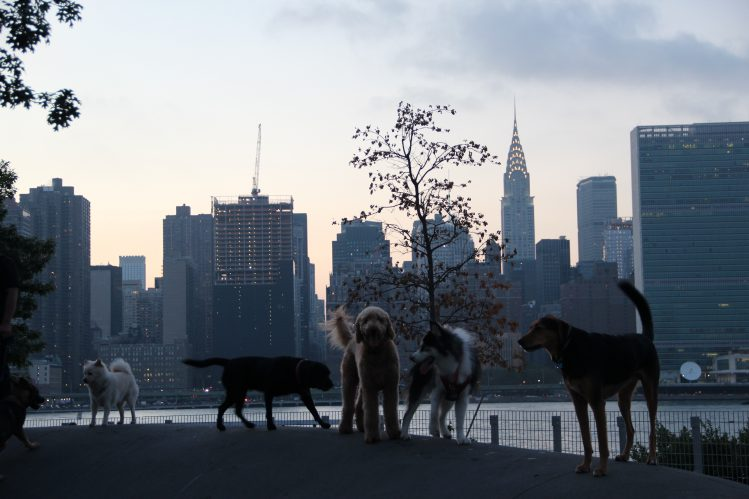 マンハッタンスカイラインを背にして立っている5匹の犬