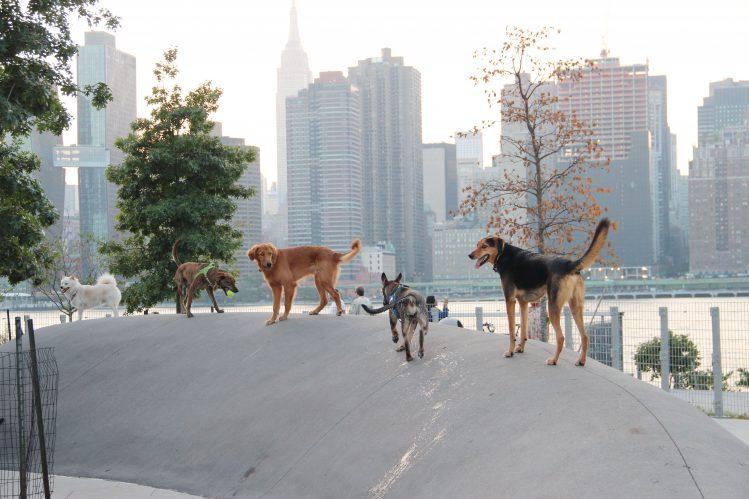 ドッグラン内の丘に立つ5匹の犬