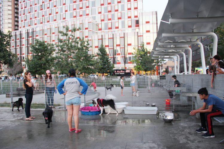 柵で分けられた各スペースで遊ぶ小型犬と中型犬