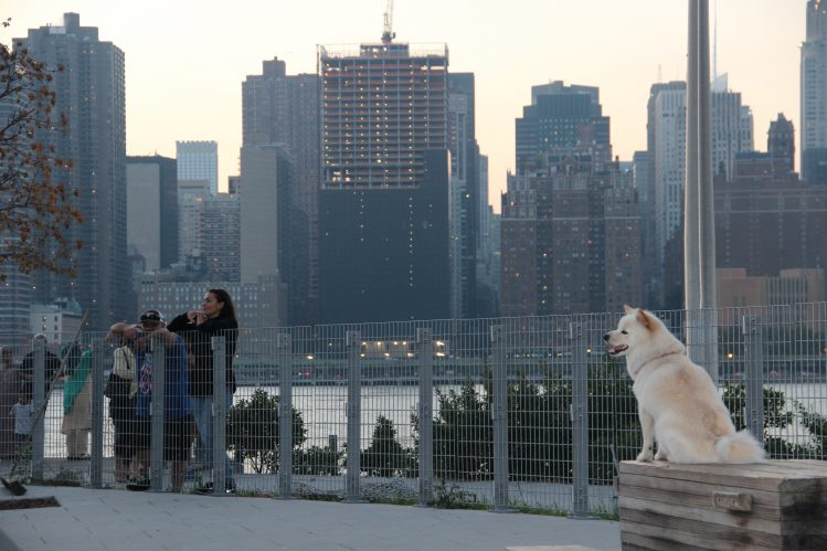 【NY愛犬家スポット】ハンターズポイントサウスパーク(Hunter's Point South Park)–NYC Doggies