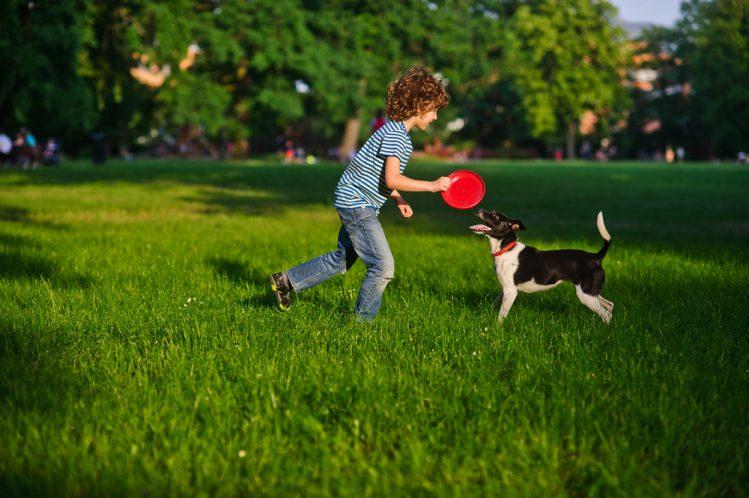 『犬と遊ぶ時間』はとっても大切!屋内・屋外でできるオススメの遊び