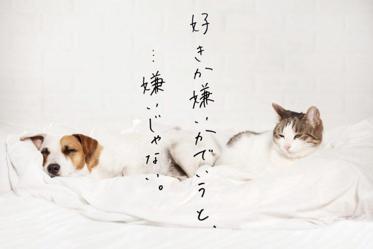 同じベッドで寝ている犬と猫