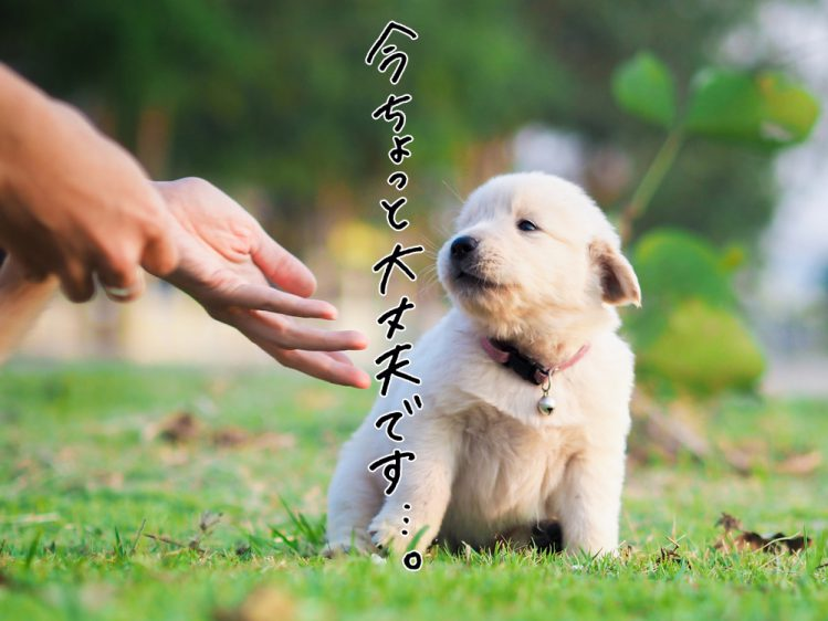 子犬とその飼い主