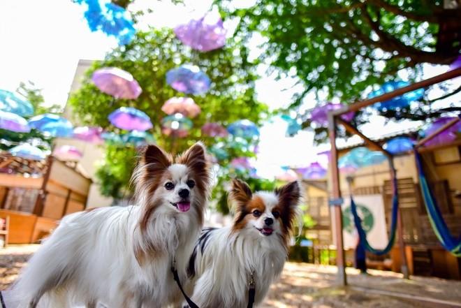 スカイアンブレラと2匹の犬