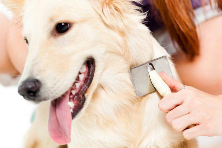 【専門家が解説】「犬のブラッシング」嫌がる愛犬には工夫と継続を