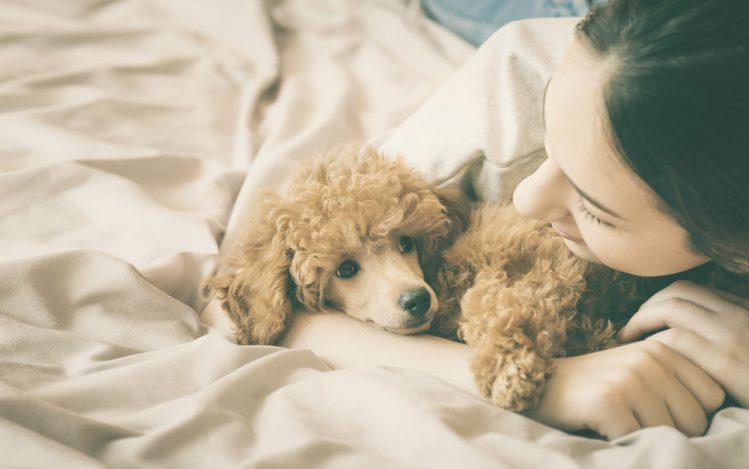 """【専門家が解説】愛犬の「マッサージ」に必要な""""スキンシップ""""のヒケツ"""