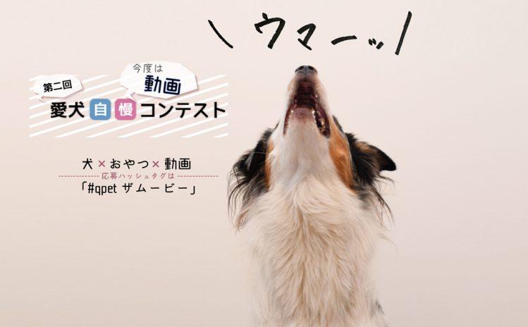第二回愛犬自慢コンテストの画像