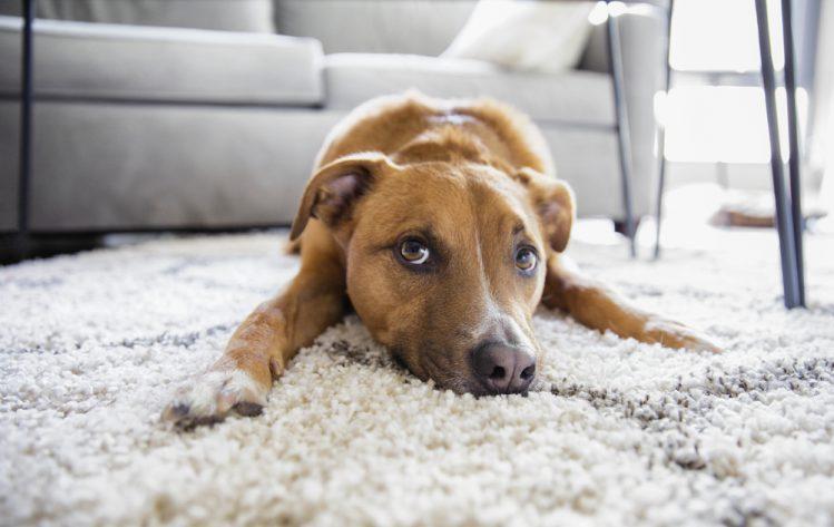 【専門家が解説】犬の肛門腺絞り(肛門絞り)のメリットやコツとは