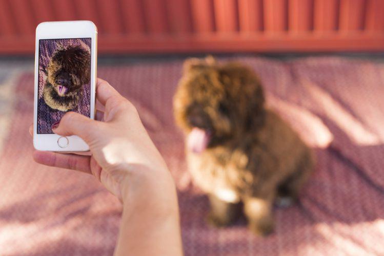 【スマホで◎】犬の写真の上手な撮り方