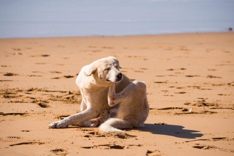 砂浜で身体を掻いている犬
