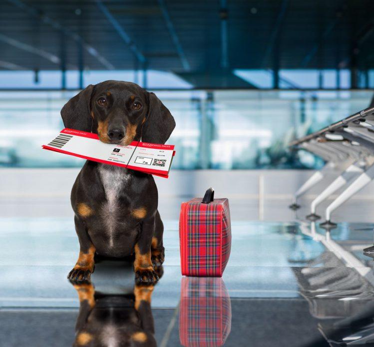 犬を飛行機に乗せる前に知っておきたい5つのこと