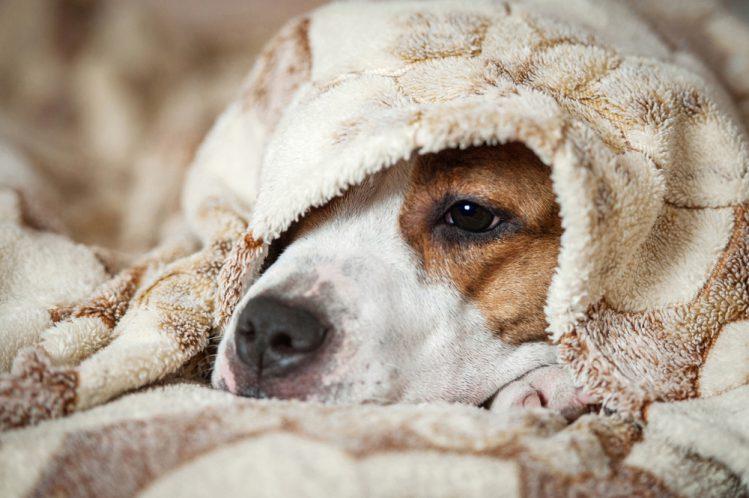 【獣医師監修】犬のてんかんは治るの?~症状・原因・対処法~