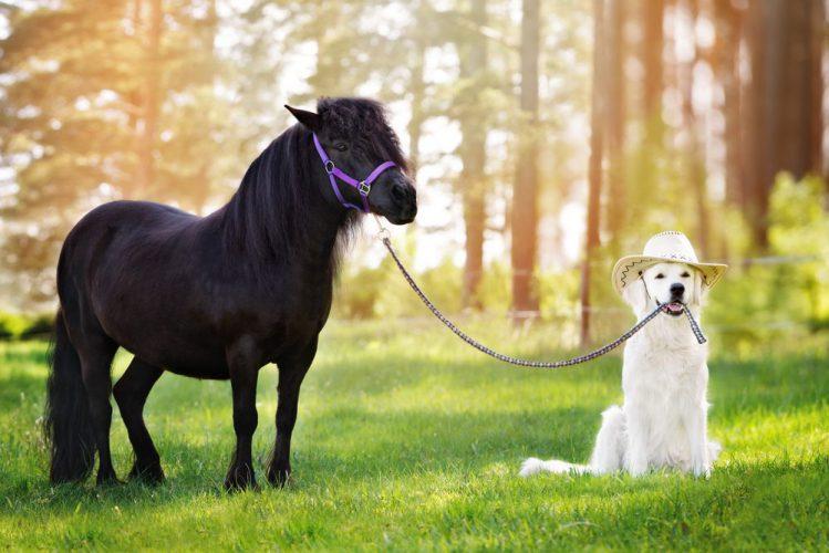 賢い犬ランキング!頭が良い犬の逸話が凄い