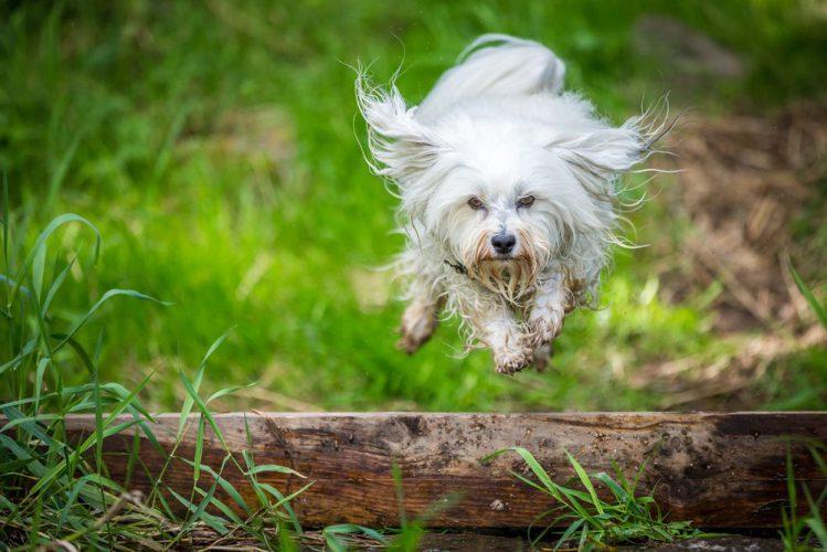 犬の帰巣本能について