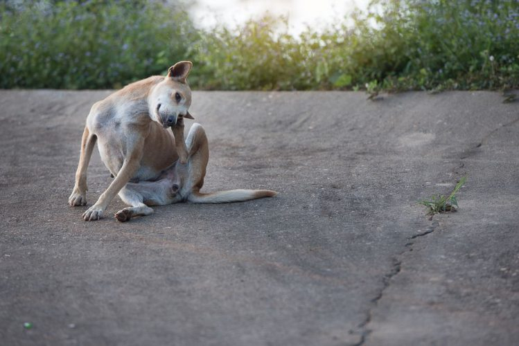 後ろ足で体を掻く犬