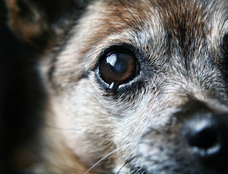涙を流している犬の瞳が大きく映っている様子