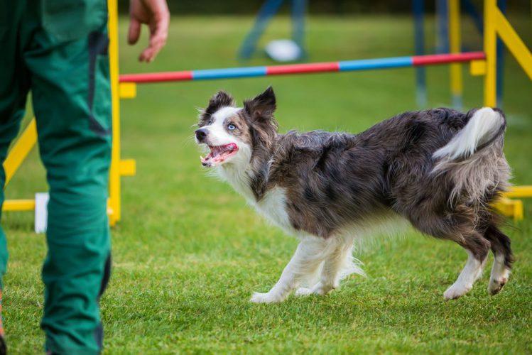 犬に関するギネス世界記録について