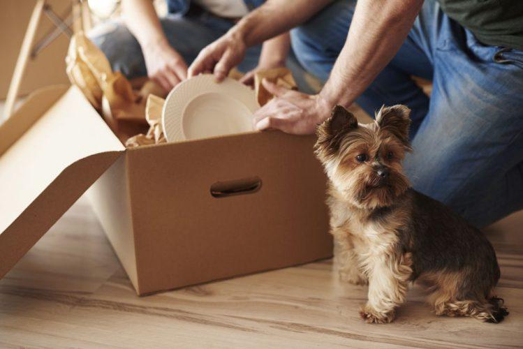 【専門家監修】引っ越しが犬に与える影響と対策方法