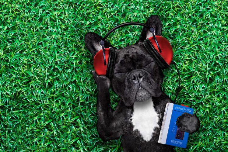 犬が好きな音ってどんな音?音楽やアプリ情報まで