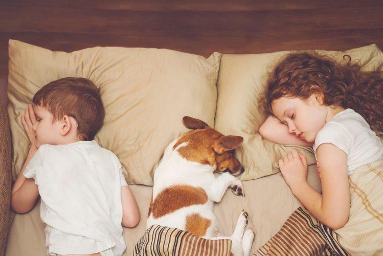 寝ている犬と子ども