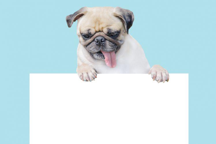 【行政書士が解説】Q「ペット可賃貸マンションへの入居前のチェック項目」