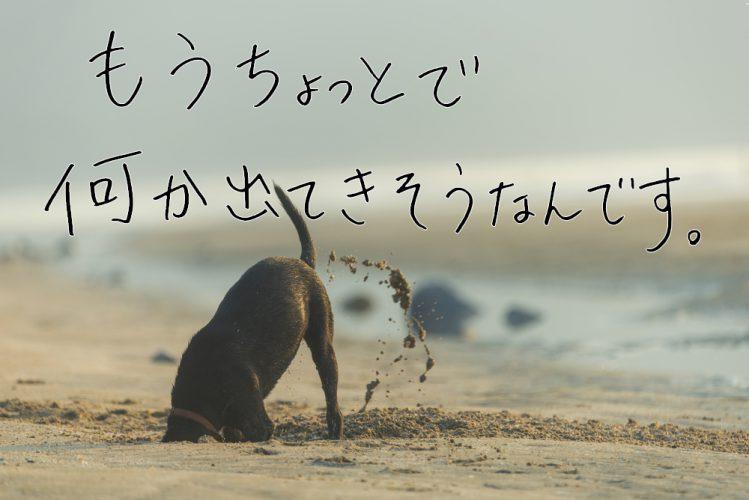 砂浜にいる犬
